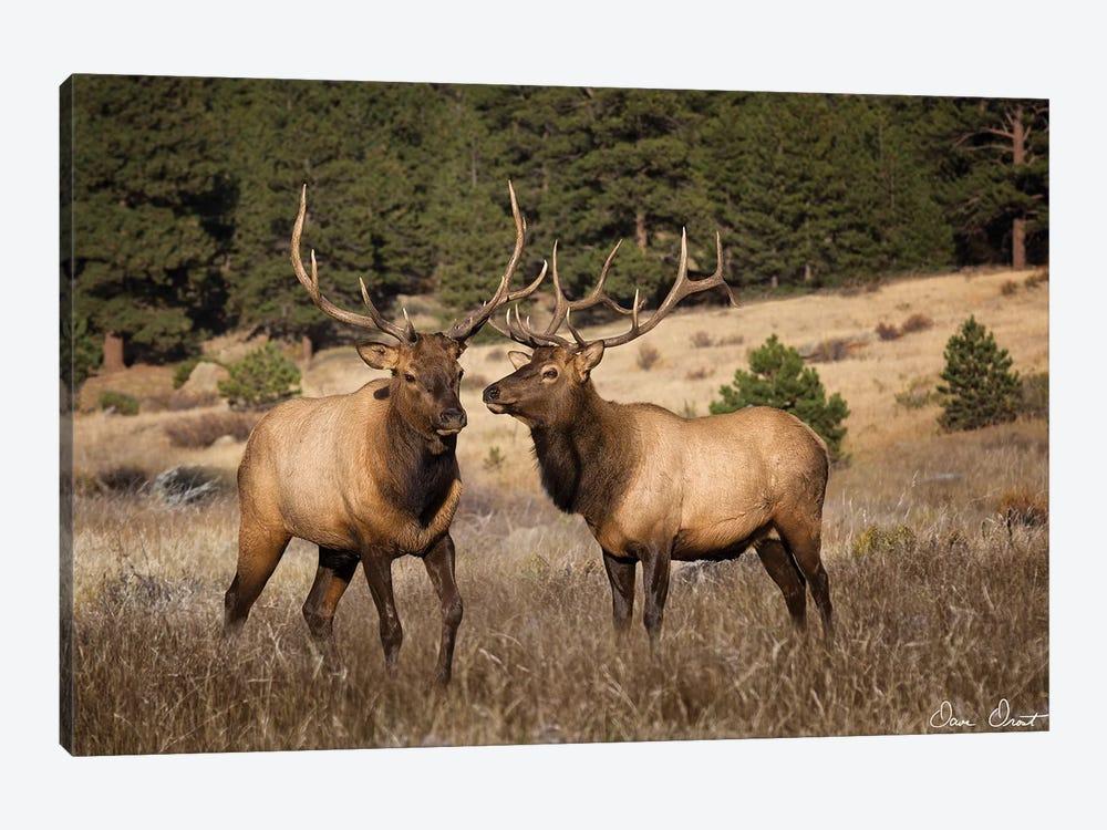 Elk Study IV by David Drost 1-piece Canvas Artwork