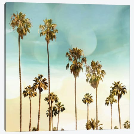 Beach Palms II Canvas Print #DED5} by Devon Davis Canvas Art