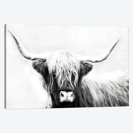Highland Longhorn Canvas Print #DEL100} by Danita Delimont Canvas Wall Art