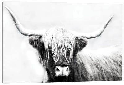 Highland Longhorn Canvas Art Print