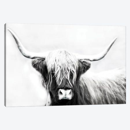 Highland Longhorn Canvas Print #DEL100} by Danita Delimont Canvas Wall Art