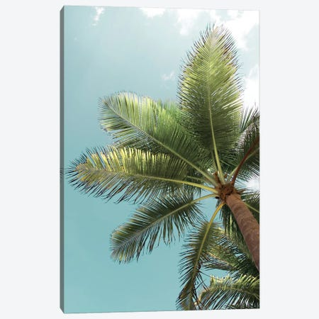 Palm Verde Canvas Print #DEL104} by Danita Delimont Canvas Print