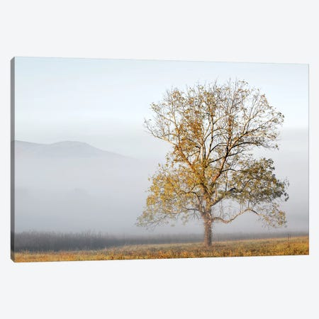 Cades Cove Canvas Print #DEL111} by Danita Delimont Canvas Print