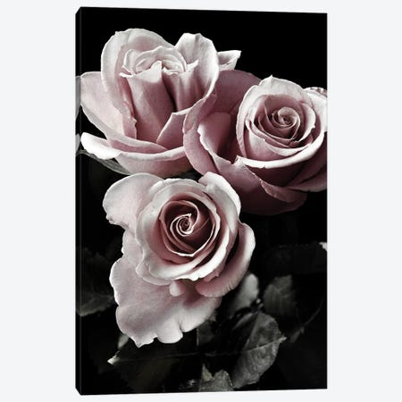 Rose Noir I Canvas Print #DEL114} by Danita Delimont Canvas Artwork