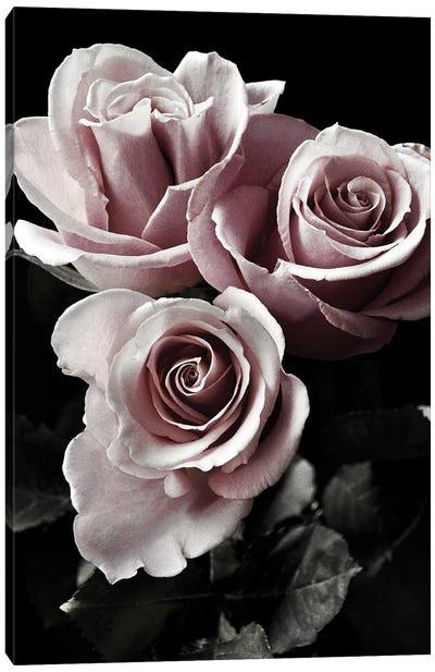 Rose Noir I Canvas Art Print