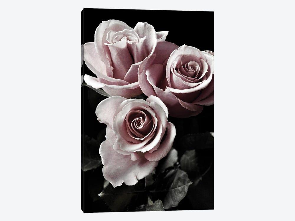 Rose Noir I by Danita Delimont 1-piece Canvas Art