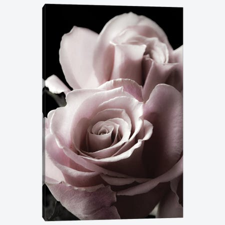 Rose Noir II Canvas Print #DEL115} by Danita Delimont Canvas Artwork
