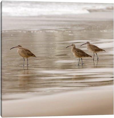 Shore Birds I Canvas Art Print