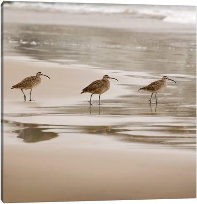 Shore Birds II Canvas Art Print