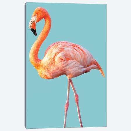 Flamingo Canvas Print #DEL126} by Danita Delimont Canvas Print