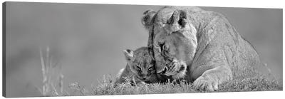 Lioness Love Canvas Art Print