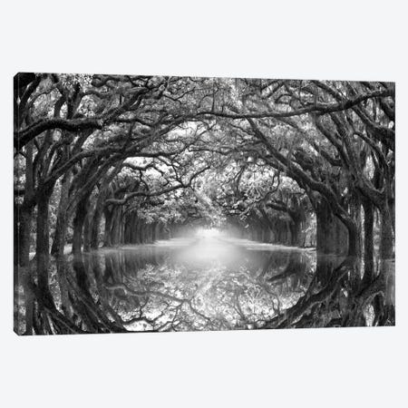 Oak Alley Reflection Canvas Print #DEL132} by Danita Delimont Art Print