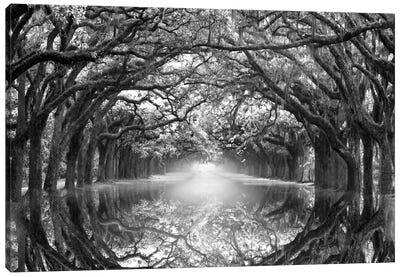 Oak Alley Reflection Canvas Art Print