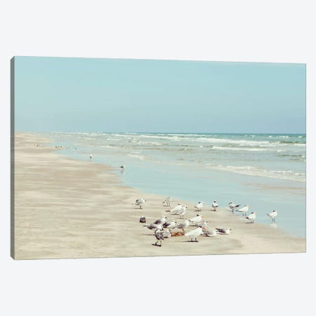 Padre Island Shore Birds Canvas Print #DEL133} by Danita Delimont Art Print