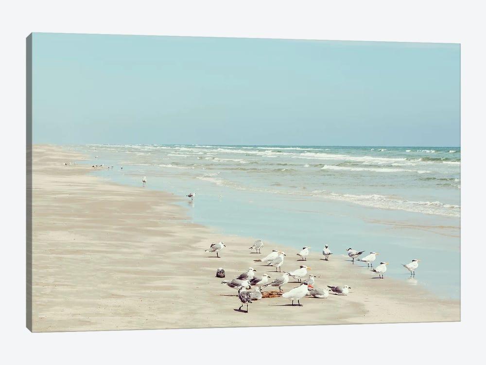 Padre Island Shore Birds by Danita Delimont 1-piece Art Print