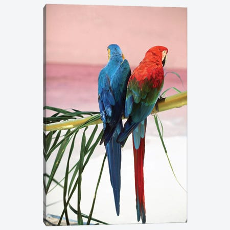 Palm Parrots Canvas Print #DEL134} by Danita Delimont Canvas Art