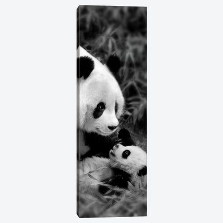 Panda Play Canvas Print #DEL135} by Danita Delimont Canvas Art