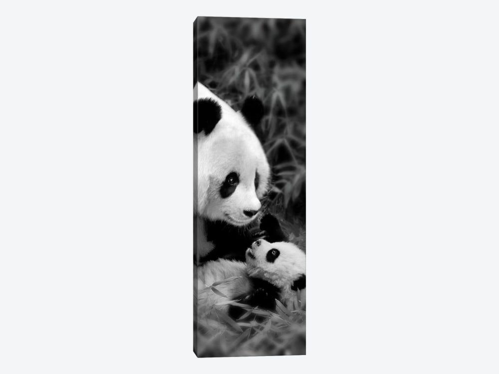 Panda Play by Danita Delimont 1-piece Art Print