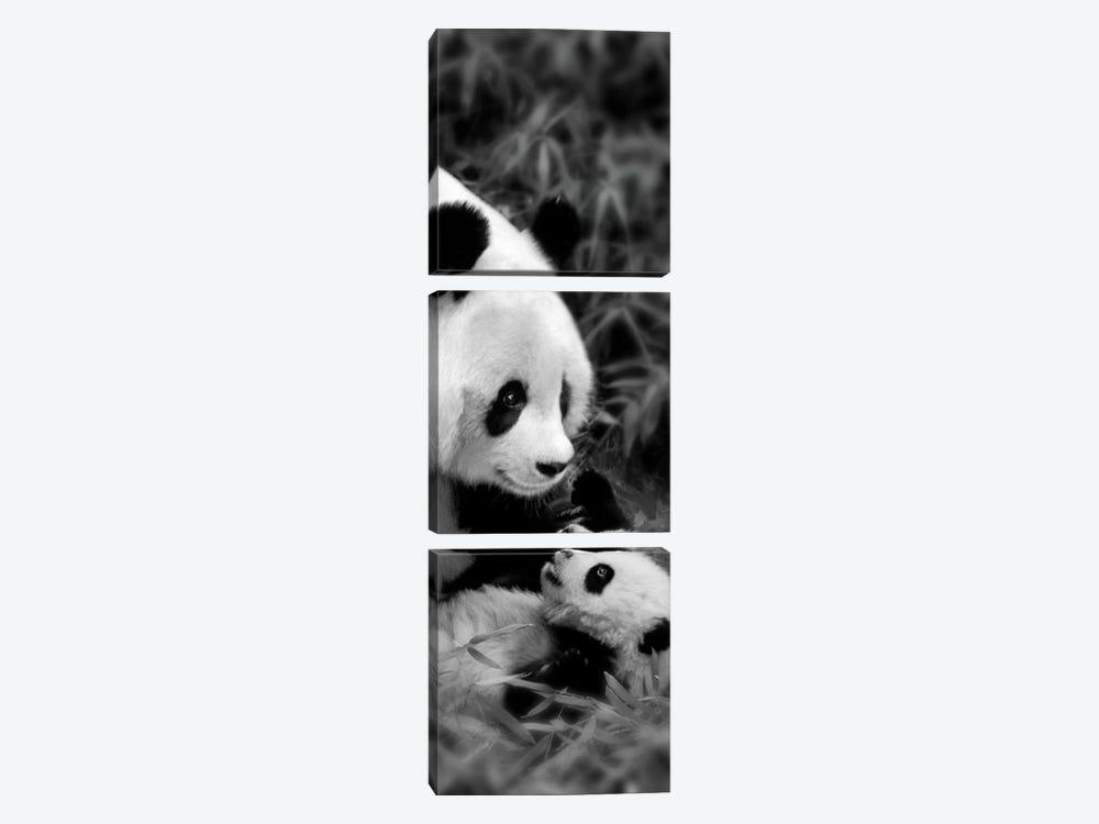 Panda Play by Danita Delimont 3-piece Canvas Print