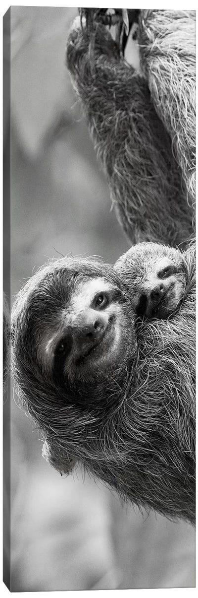 Sloth Swing Canvas Art Print