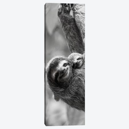 Sloth Swing Canvas Print #DEL139} by Danita Delimont Art Print