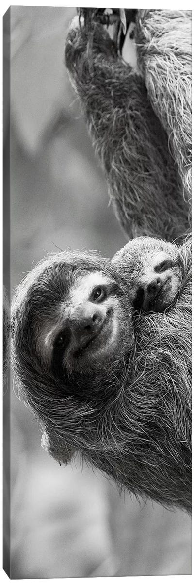Sloth Swing Canvas Art Print