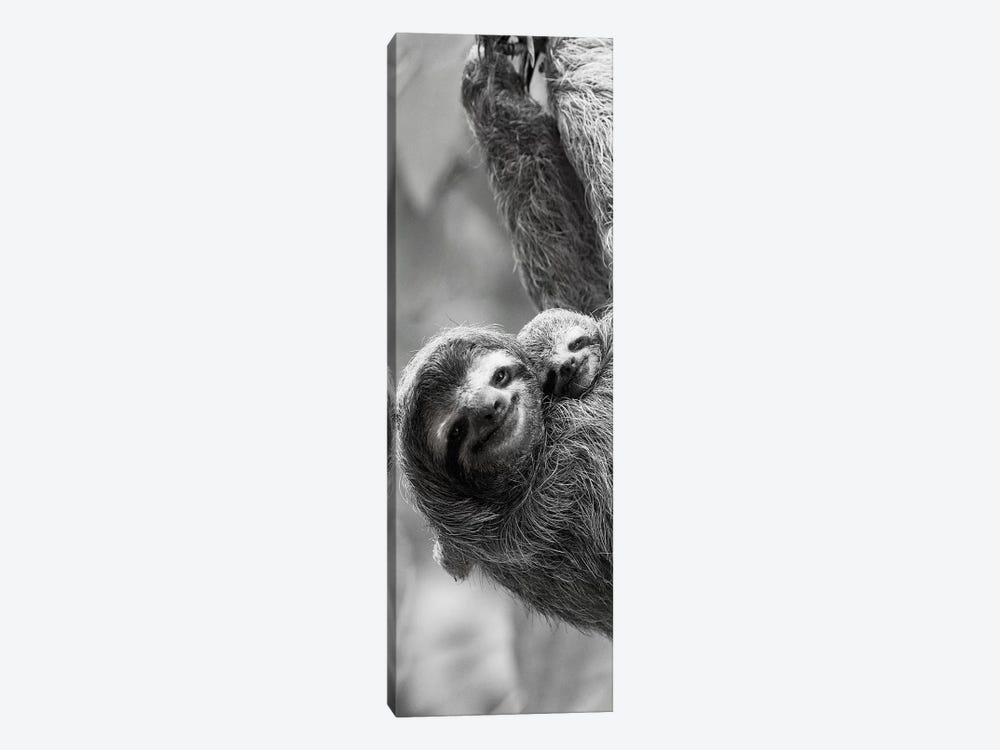 Sloth Swing by Danita Delimont 1-piece Canvas Art Print