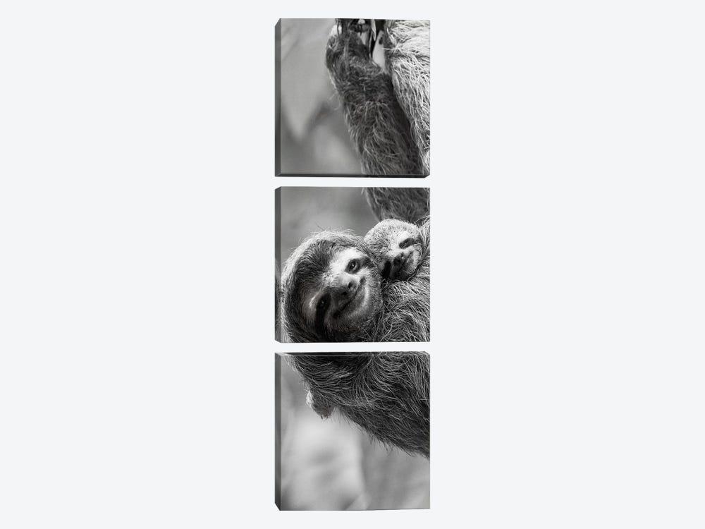 Sloth Swing by Danita Delimont 3-piece Art Print