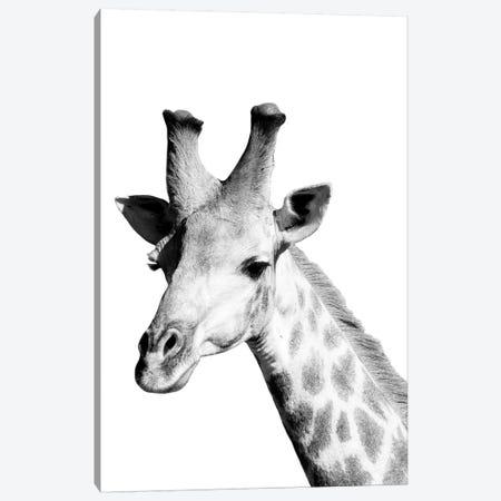 Safari Giraffe Canvas Print #DEL180} by Danita Delimont Canvas Artwork