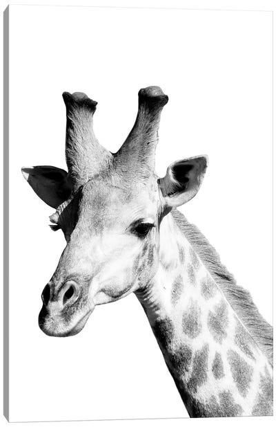 Safari Giraffe Canvas Art Print