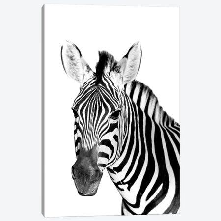 Safari Zebra Canvas Print #DEL181} by Danita Delimont Canvas Wall Art