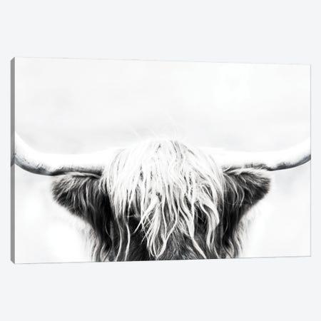 Longhorn Canvas Print #DEL201} by Danita Delimont Art Print