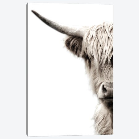 Highland Cattle Canvas Print #DEL203} by Danita Delimont Canvas Art Print