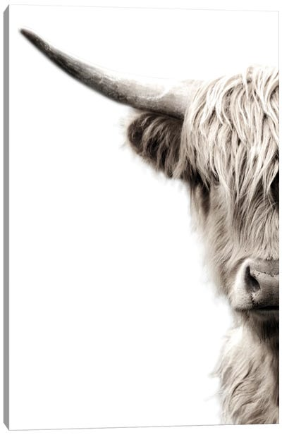 Highland Cattle Canvas Art Print