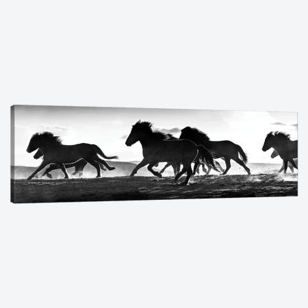 Icelandic Horses at Sunset Canvas Print #DEL204} by Danita Delimont Canvas Wall Art