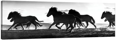 Icelandic Horses at Sunset Canvas Art Print