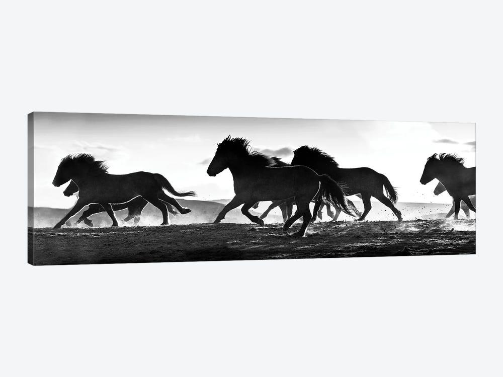Icelandic Horses at Sunset by Danita Delimont 1-piece Canvas Print