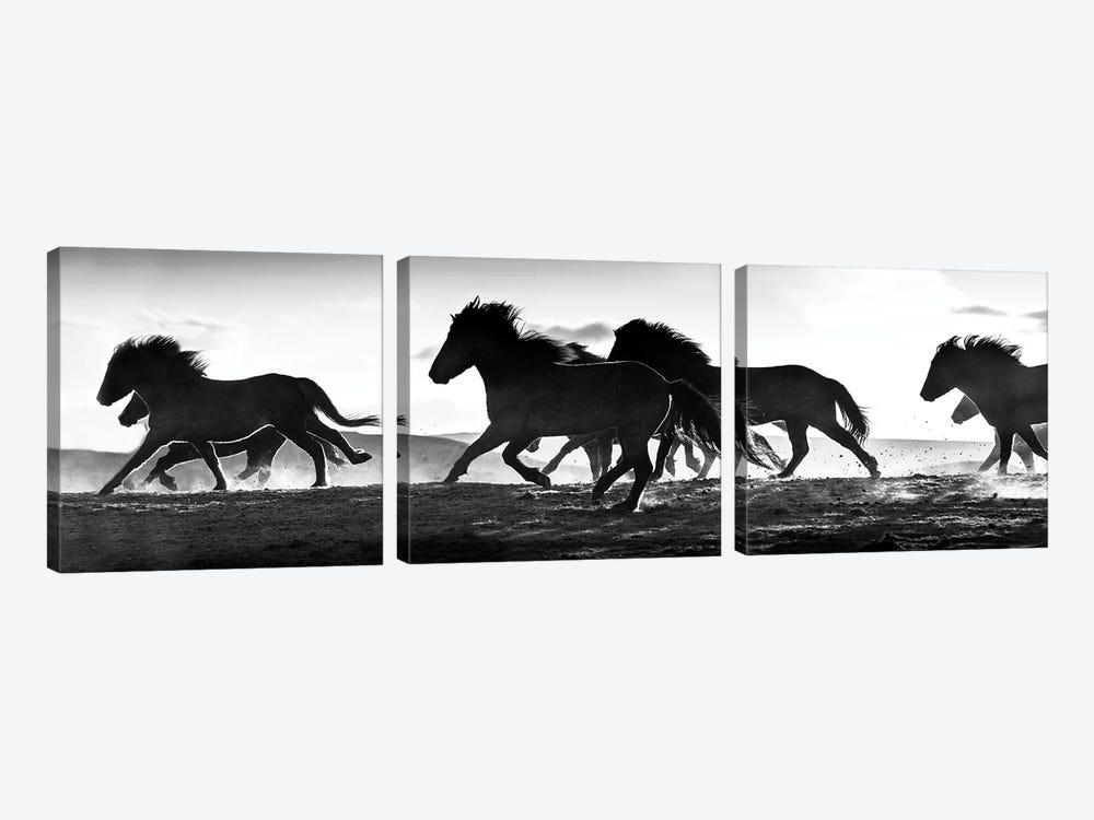 Icelandic Horses at Sunset by Danita Delimont 3-piece Canvas Print