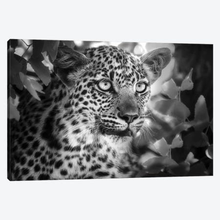 On the Hunt Canvas Print #DEL206} by Danita Delimont Canvas Wall Art