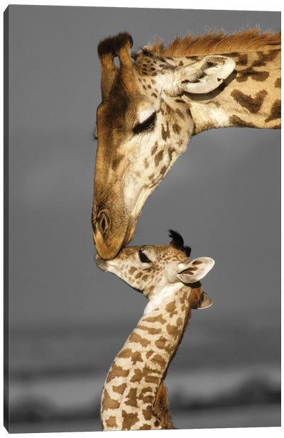 Masai Mara Giraffe Family Canvas Art Print