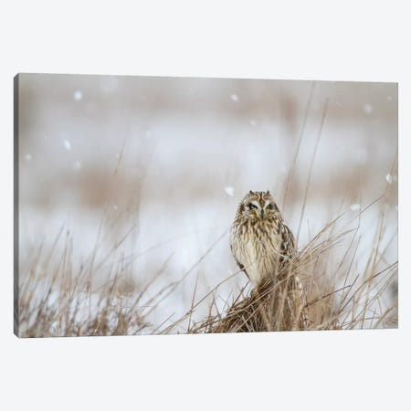Prairie Winter Canvas Print #DEL71} by Danita Delimont Canvas Artwork