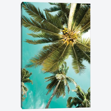 Palms Up Canvas Print #DEL84} by Danita Delimont Canvas Artwork