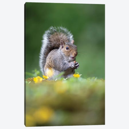 The Nut Thief Canvas Print #DEM100} by Dean Mason Canvas Art Print