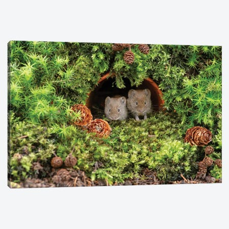 Who Woke Us Up - Bank Vole Canvas Print #DEM109} by Dean Mason Art Print