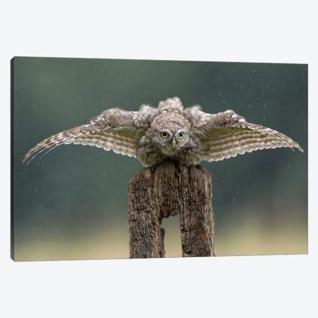 Batman - Little Owl Canvas Print #DEM10} by Dean Mason Art Print