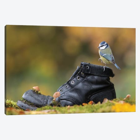 Blue Tit On Old Boot Canvas Print #DEM12} by Dean Mason Canvas Art Print