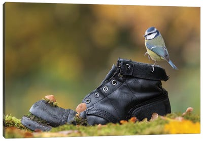 Blue Tit On Old Boot Canvas Art Print