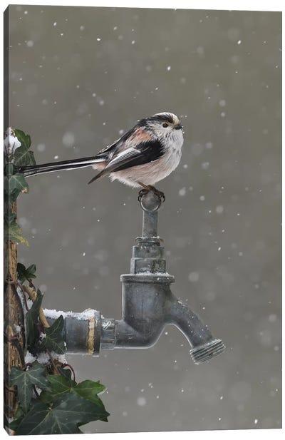 Frozen Garden Tap - Long Tailed Tit Canvas Art Print
