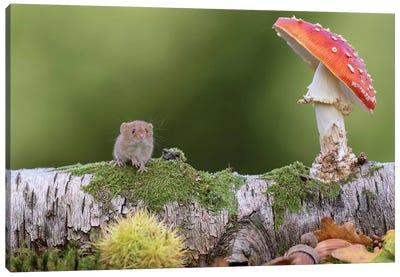 Hello Autumn - Harvest Mouse Canvas Art Print