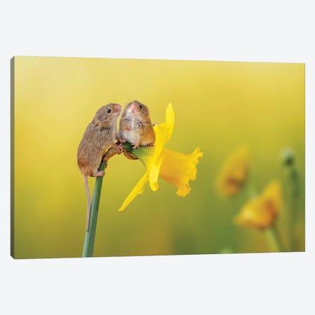 Among The Daffodils Canvas Print #DEM3} by Dean Mason Canvas Wall Art